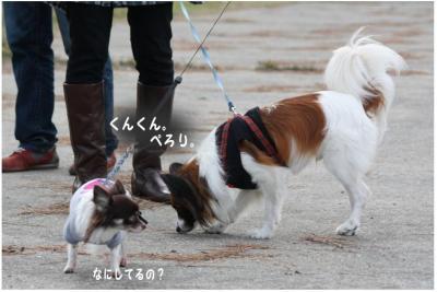 コピー (8) ~ どうめき3