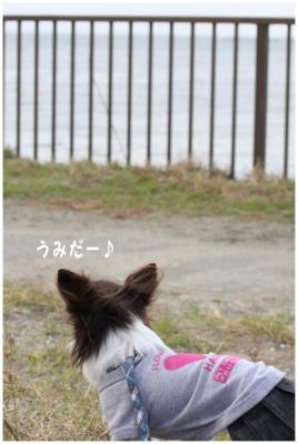 コピー (7) ~ どうめき3
