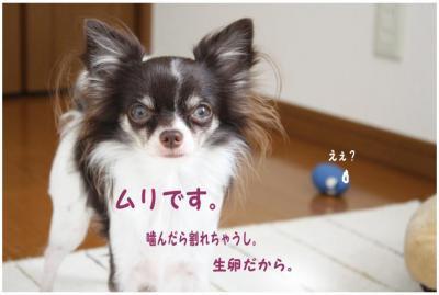 コピー (5) ~ たまごちゃん