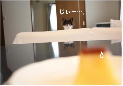 コピー ~ ぷりん