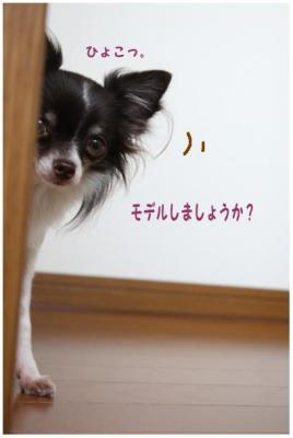 コピー (5) ~ さきどり