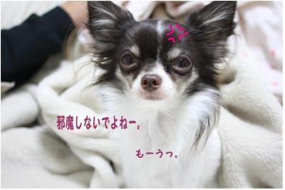 コピー (6) ~ 寒い