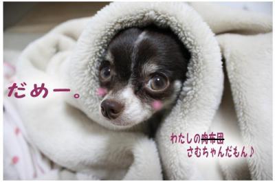コピー (7) ~ 寒い