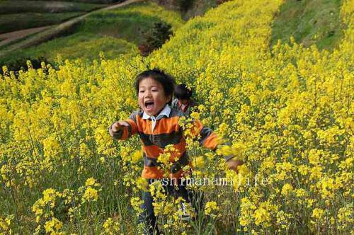 菜の花と子供IMG_9988_