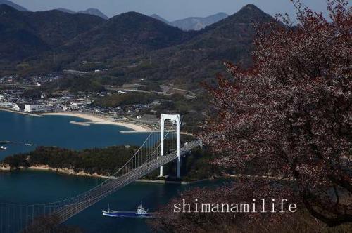今治市大島カレイ山展望台の桜IMG_2311c