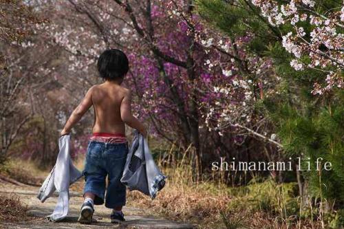 伯方町開山桜IMG_2524
