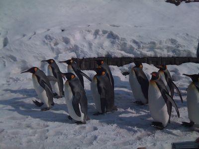 ペンギン行進2