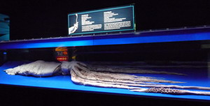 2009011610.jpg