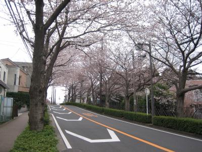 通称 桜通り と言うらしい・・