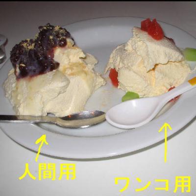 豆乳ババロア(人間&ワンコ用)