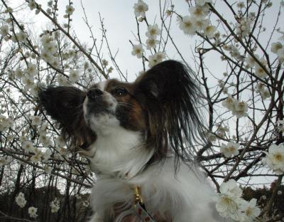 うほ~♪花粉が花粉が・・
