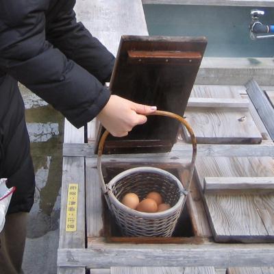 温泉卵作っちゃいます