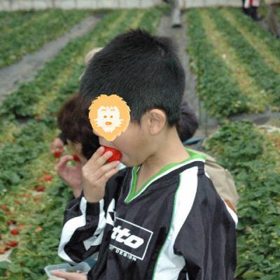 おいしいイチゴいっぱい食べようね