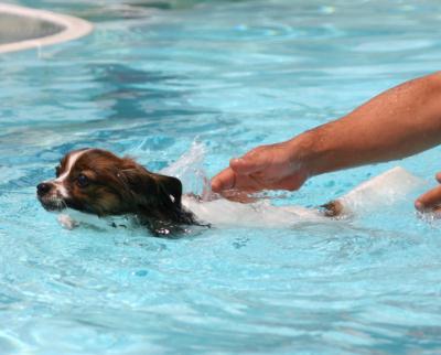 初めての水泳