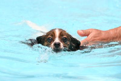 華麗なる?泳ぎ(笑)