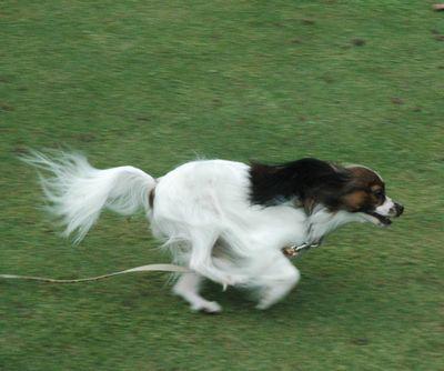 お庭で走れるなんて幸せ♪