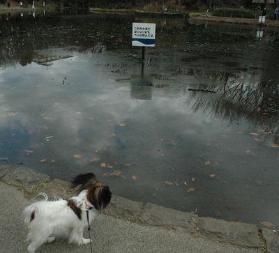 お池こおってる??