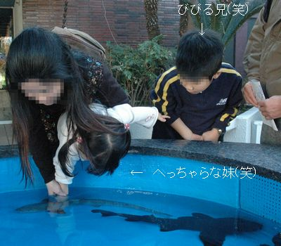 サメに触れるんだよ~