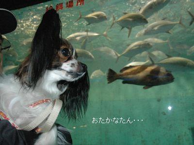 いっぱい魚が泳いでる~♪