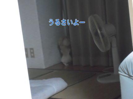 image100_20090711211543.jpg