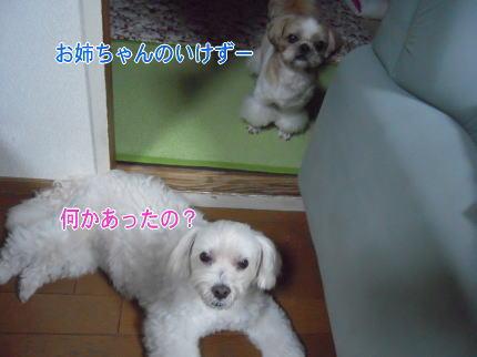 image105_20090711213045.jpg