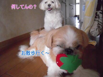 image111_20090712204729.jpg