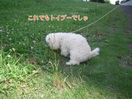 image123_20090714214924.jpg