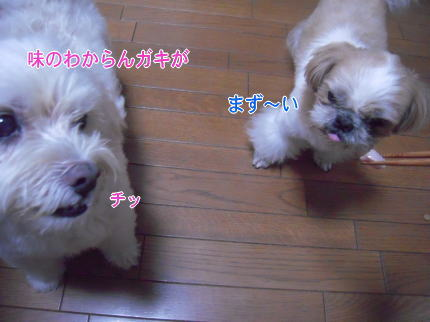 image139_20090721213934.jpg