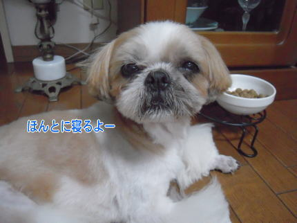 image157_20090723205258.jpg