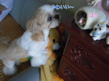 image225_20090808213001.jpg