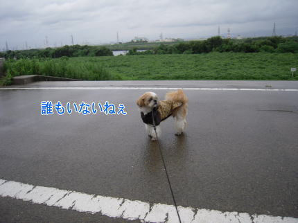 image228_20090809214320.jpg