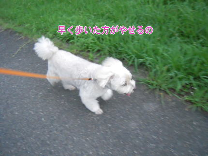 image246_20090814142225.jpg