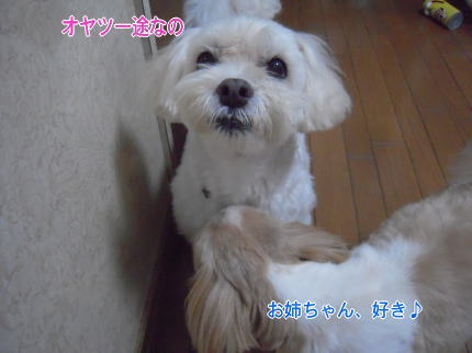 image253_20090815211634.jpg