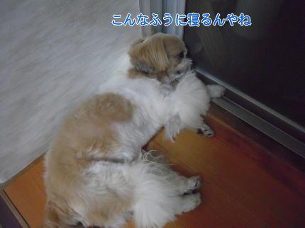 image261_20090817214659.jpg