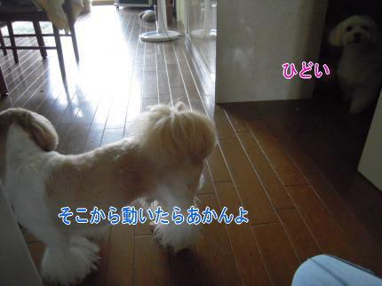 image8.jpg