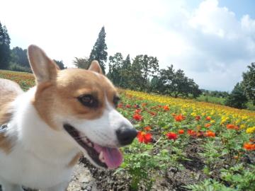 ハナコ花畑