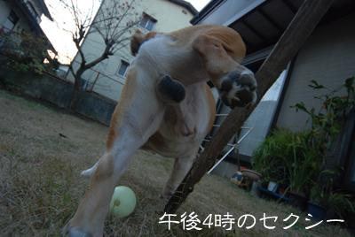 bull511.jpg