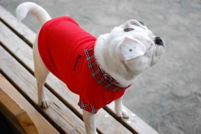 「はな」ちゃん、赤い服似合う?