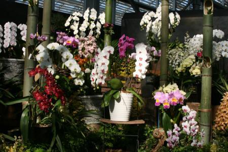 花センターの洋ラン展