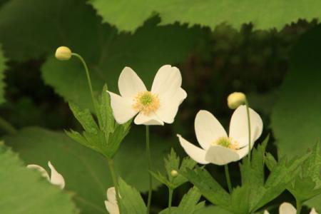 日光植物園の春