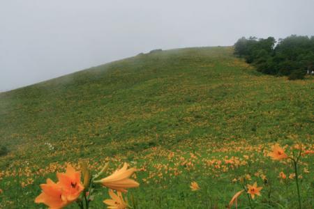霧降高原の夏