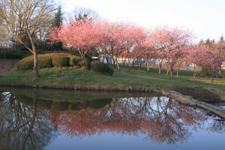 古河の花桃