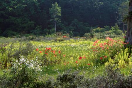駒止湿原の初夏