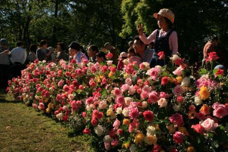 ましこ花の博覧会
