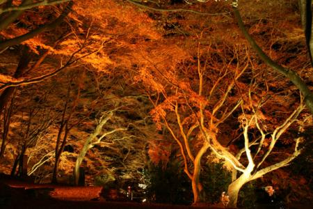 佐久山紅葉の夜景