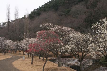 佐野市梅林公園