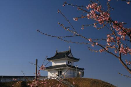 宇都宮城址公園の桜
