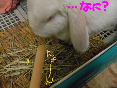 snap_hanatose_200960221545.jpg