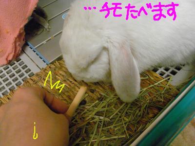 snap_hanatose_200960222215.jpg