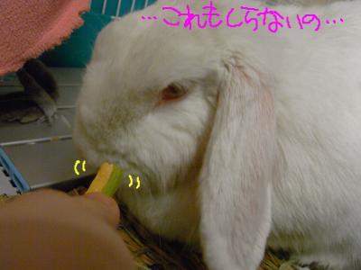 snap_hanatose_200960222647.jpg